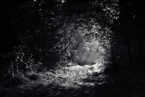 woods-690415_960_720.jpg