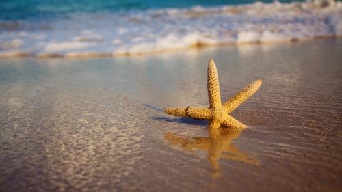starfish-beach-sand-1024x576
