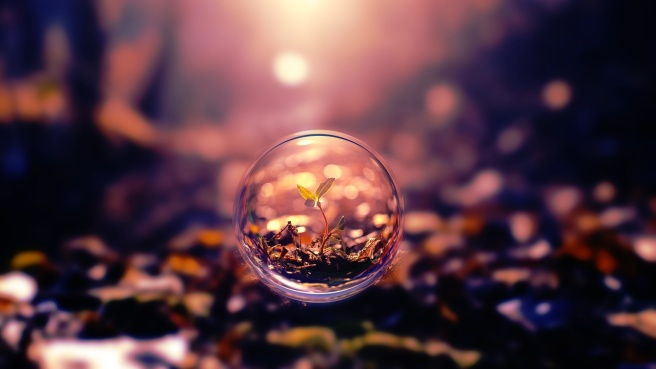 plant-in-bubble-1280x720