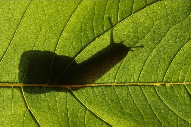 Snail-Silhouette-634x422