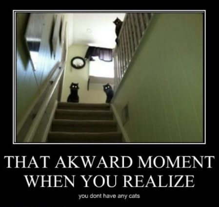 black cat awarkd