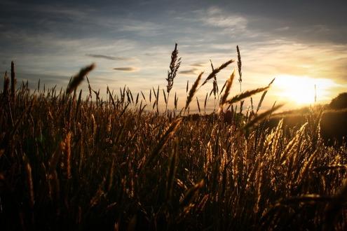 field-1840196_960_720.jpg