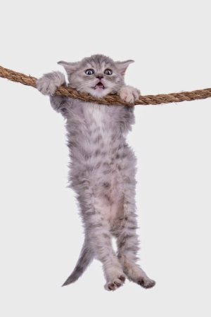 cat-hanging-on