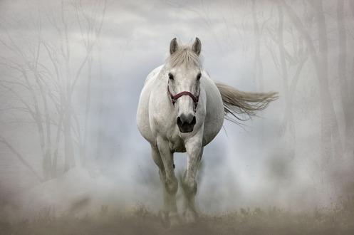 horse-1864334_960_720