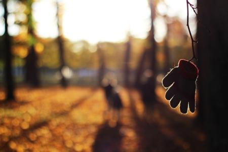 autumn-1866635_960_720