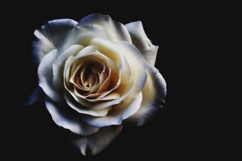 flower-1949242_960_720