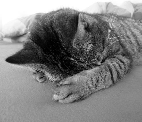 cat-98360_960_720