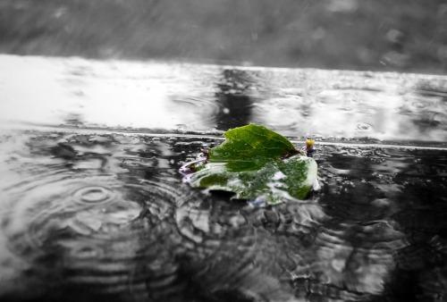 green-84649_960_720