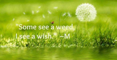 meadow-2225250_960_720.jpg