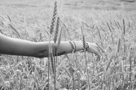 wheat-925760_960_720