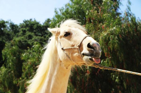 horse-1506639_1280