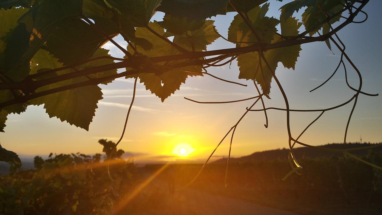 sunrise-1615892_1280