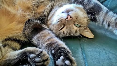 cat-1009284_1280