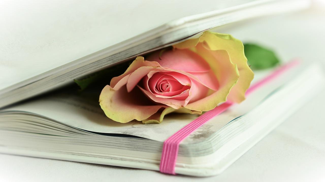 rose-764267_1280