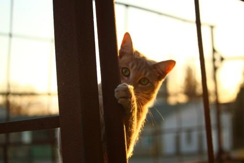 cat-1040815_1280