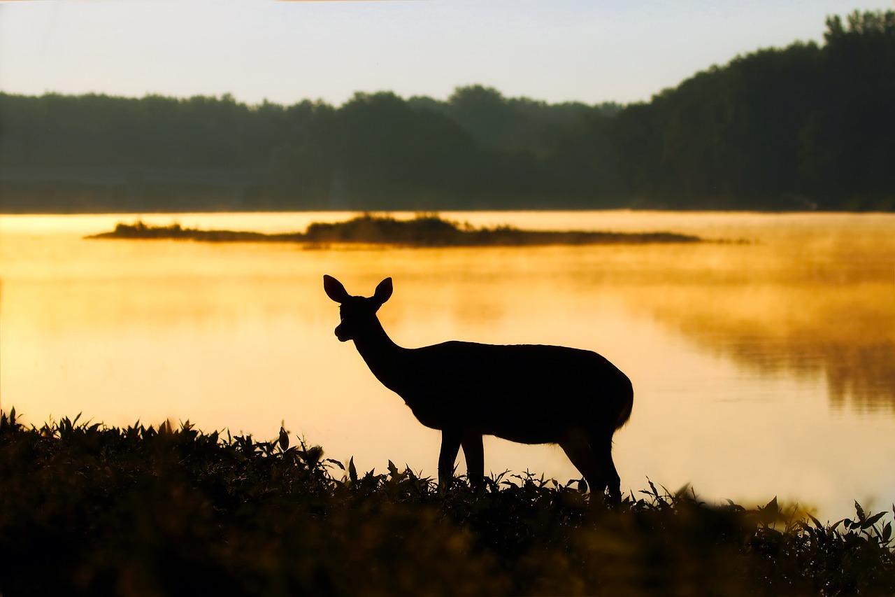 deer-2021157_1280