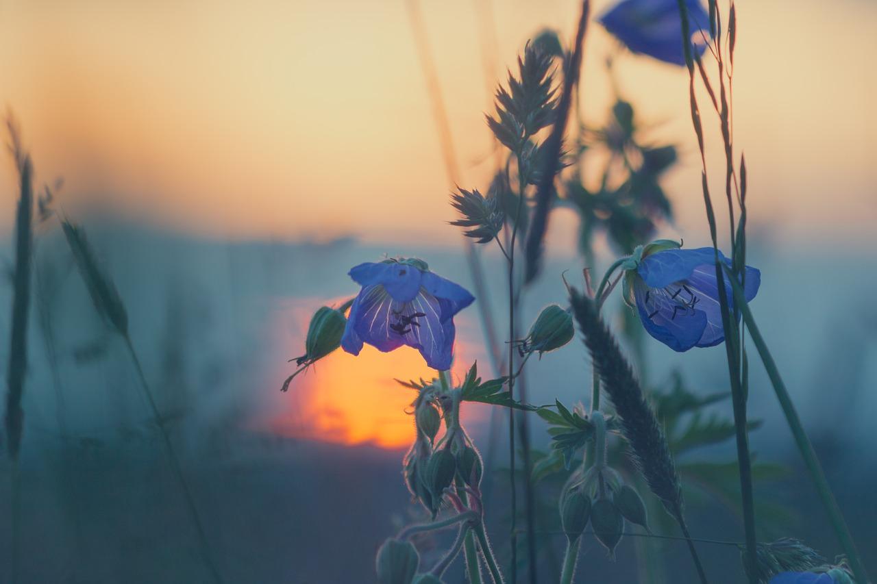 meadow-811339_1280