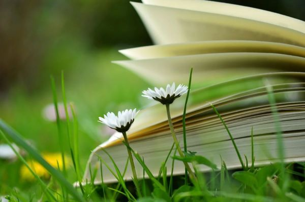 book-230